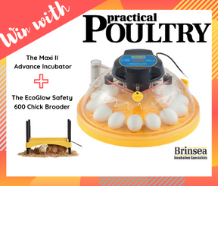 Win with Practical Poultry & Brinsea!
