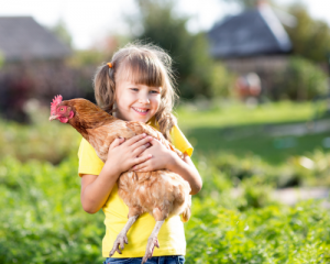 right diet for pet hens