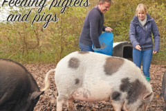 Feeding piglets and pigs