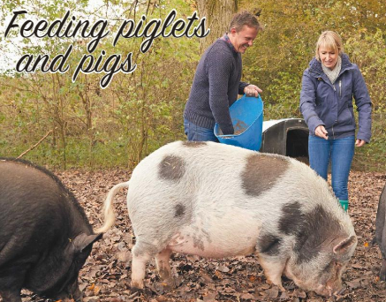 Feeding piglets and pigs | Your Small Holding