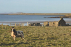 Orkney smallholding – Island Life