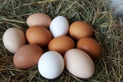 Hens – egg production drop off