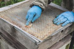 Bee keeping in the winter – preparing for the new season