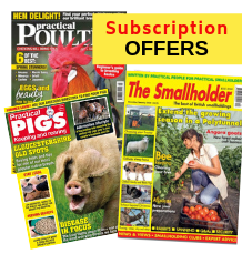 Subscription Offers