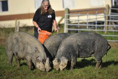 Me and my pigs